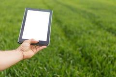 Landwirt, der Tablet-Computer auf dem grünen Weizengebiet verwendet Weißer Bildschirm stockfotografie
