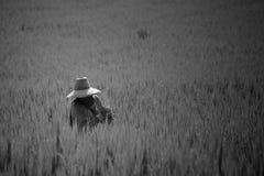 Landwirt, der ungeschälten Reis erntet Lizenzfreies Stockbild