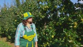 Landwirt geht entlang eine Reihe von Apfelbäumen stock video