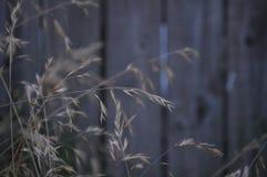 Landwirt Grass lizenzfreie stockfotos
