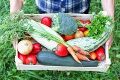 Landwirt hält einen Kasten Gemüse Herbst, der Konzept erntet oberseite stockfotografie