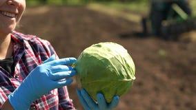 Landwirt hält einen Kohl auf dem Hintergrund eines Arbeitstraktors auf dem Gebiet stock footage