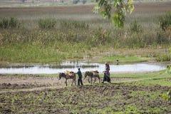 Landwirt in Harar, Äthiopien Lizenzfreies Stockfoto