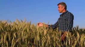 Landwirt hat Sorgfalt seines Weizenfeldes stock video footage