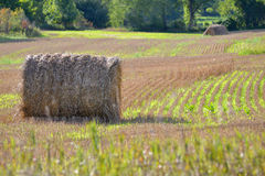 Landwirt-Heu-Feld-Ernte Stockfoto