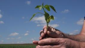 Landwirt im Garten halten in seinen Händen ein Pflänzchen mit Wurzeln lizenzfreies stockfoto