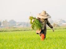 Landwirt im Porzellan stockbild