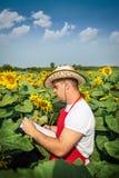 Landwirt im Sonnenblumenfeld Stockfotografie