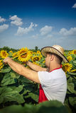 Landwirt im Sonnenblumenfeld Stockbilder