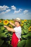 Landwirt im Sonnenblumenfeld Lizenzfreie Stockfotografie