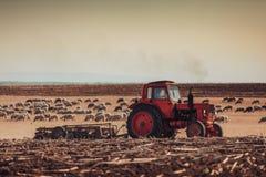 Landwirt im Traktor, der Land mit Saatbeetlandwirt und Kraut von Schafen vorbereitet Lizenzfreie Stockfotos