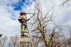 Landwirt ist Beschneidungsniederlassungen von Obstbäumen im Obstgarten unter Verwendung lang lizenzfreie stockbilder