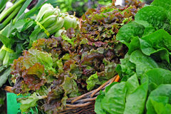 Landwirt-Markt-Kopfsalat Stockbilder