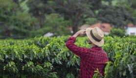 Landwirt mit dem Hut, der das Kaffeeplantagefeld schaut Stockbild