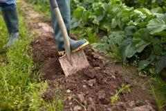 Landwirt mit grabendem Gartenbett oder -bauernhof der Schaufel Stockfotos