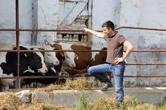 Landwirt mit Jungrindern Stockfotos