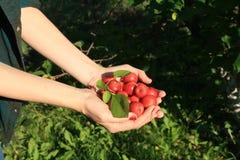 Landwirt mit roten Äpfeln lizenzfreie stockfotos
