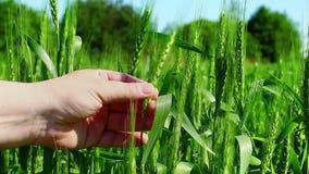 Landwirt nahe dem Feld Lizenzfreie Stockbilder