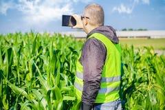 Landwirt nahe dem Maisfeld mit Tablet-PC Lizenzfreies Stockbild