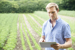 Landwirt On Organic Farm, das Digital-Tablet verwendet lizenzfreies stockfoto
