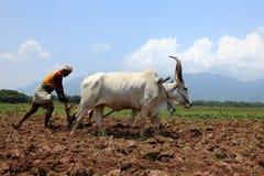 Landwirt pflügt landwirtschaftliches Feld Lizenzfreie Stockfotos