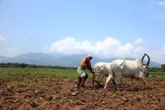 Landwirt pflügt landwirtschaftliches Feld Stockbild