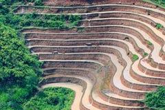 Landwirt pflanzt Reis auf terassenförmig angelegtem Feld für neue Jahreszeit stockfoto