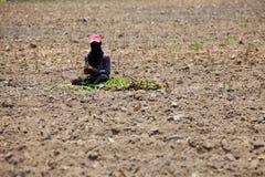 Landwirt-Preparing Young Cassava-Anlage Stockfoto