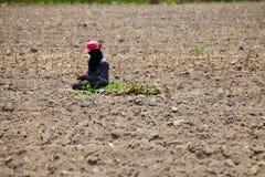Landwirt-Preparing Young Cassava-Anlage Lizenzfreies Stockfoto