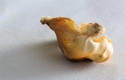 Landwirt ` s exotische Pilze Marktes auf weißem Segeltuch in der Wintersaison Lizenzfreie Stockfotos