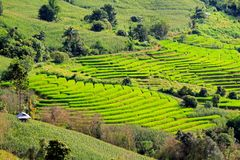 Landwirt ` s Hütte sind auf dem hohen Berg mit Reis ield Lizenzfreie Stockbilder