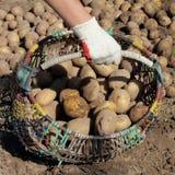 Landwirt sammelt Herbsternte Lizenzfreies Stockfoto