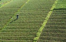 Landwirt- und Gemüsefelder lizenzfreie stockfotos