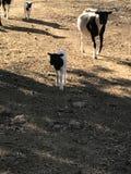 Landwirt- und Kätzchenzufuhrpferd lizenzfreie stockfotos