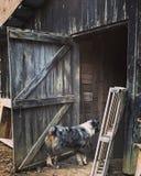 Landwirt- und Kätzchenzufuhrpferd Stockbilder