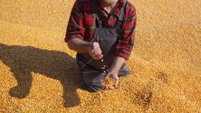 Landwirt- und Maisernte stockbilder