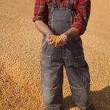 Landwirt- und Maisernte lizenzfreies stockbild
