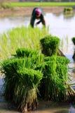 Landwirt von Thailand Lizenzfreie Stockbilder