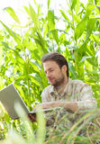 Landwirt vor dem Maisfeld, das an Laptop-Computer arbeitet Lizenzfreie Stockfotos