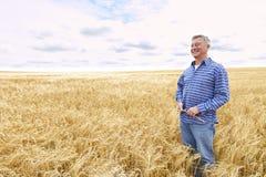 Landwirt In Wheat Field, das Ernte kontrolliert Lizenzfreie Stockfotos