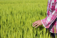 Landwirt wird mit seinem Bauernhof gefallen Stockbild