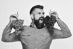 Landwirt zeigt sein Ernteweinproduktions- und -herbstkonzept Lizenzfreie Stockbilder