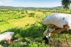 Landwirtbärntaschen vom Feld mit Gras Stockfoto