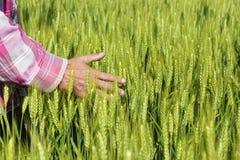 Landwirte übergeben auf dem Weizengebiet Stockfotos