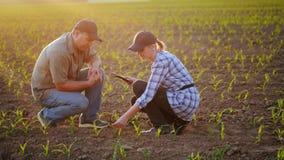 Landwirte arbeiten auf dem Gebiet, sie sitzen nahe den grünen Trieb von Jungpflanzen Debatte, benutzen die Tablette Schöner Abend lizenzfreies stockbild