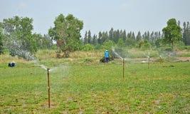 Landwirte berieseln ihre Wiese in der Sommersaison, Wiesenfeld Thailand Stockfotografie