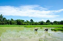 Landwirte bewirtschaften. stockbilder