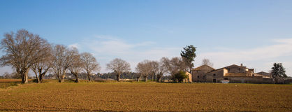 Landwirte bringen mit Nessel-Bäumen unter Stockfoto