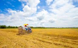 Landwirte der erntende goldene Reis mit Traktor Stockfotografie