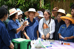 Landwirte, die Reis durch das Demonstrieren der genügenden Wirtschaft pflanzen Stockbilder